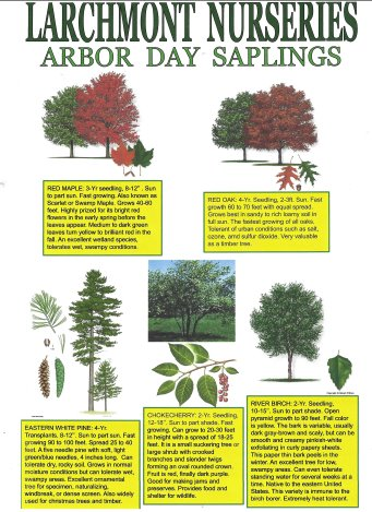 Larchmont Nurseries Free Tree Sapling Flyer