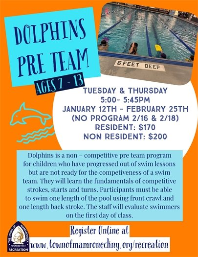 Dolphins Winter