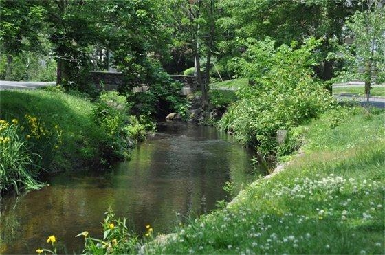 Larchmont Gardens Brook